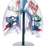 Respiratory - All Products